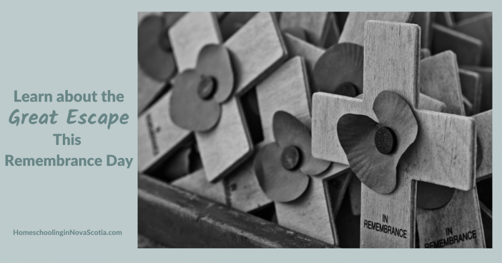 learn about the great escape this remembrance day - poppies on crosses